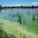 ¿Por qué esta verde el lago del Parque del Sur?